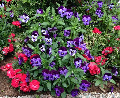 160616_blomsterkrukke_med_blomster8