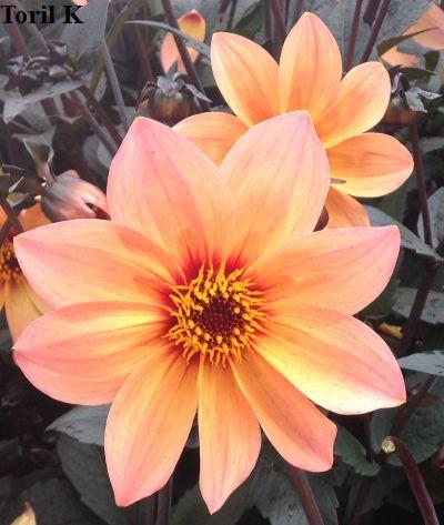 010816_nydelig_blomst6