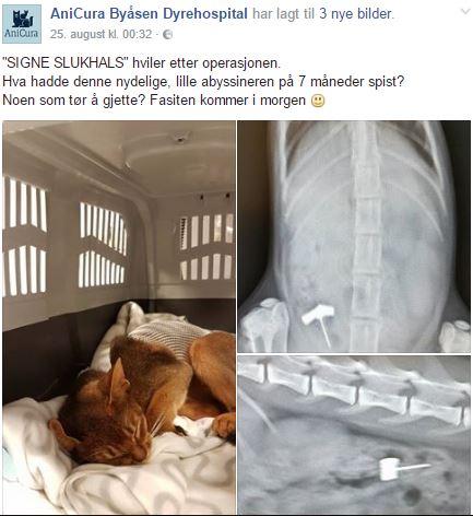 230816_signe_veterinaer1